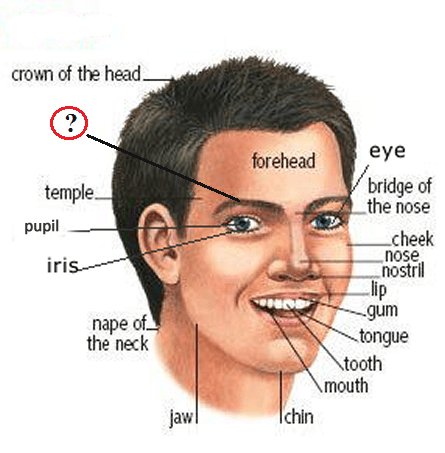 Parts Of The Face Vocabulary For People
