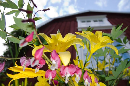 torp_blomster