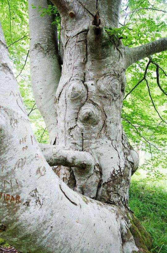 baldersnas_skog