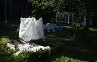 Maiskolbene har fått stå under et telt av fiberduk fra utplanting i mai til midten av juni. Det har tydeligvis vært en suksessoppskrift.