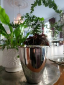grønne-planter5
