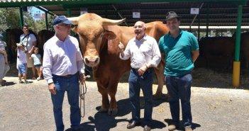 Канарский бык Manzanero оказался круче всех быков Испании