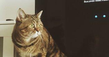 """Коты в Испании перестанут быть просто """"вещами"""""""