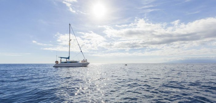 Гражданская гвардия открывает 20 дел против компаний - организаторов визитов к китообразным