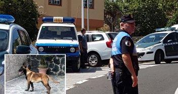 В Fasnia, на Тенерифе, умер ребёнок, покусанный домашним псом