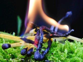 На Канарах объявлено максимальное предупреждение об опасности пожаров на островах