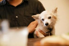 愛犬、豆田マメタロウさん。