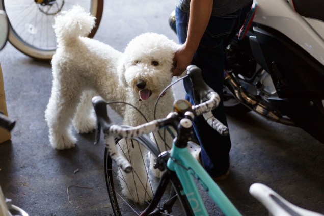 緑の娘さん用自転車とおっきなプードルちゃん。かわいい~。