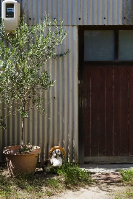 このオリーブの木とは、『木鳩屋』が倉敷えびす通りにあった 時からの付き合い
