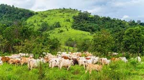 The Ogun State Assembly Passed A Measure Prohibiting Open Grazing.