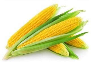 الذرة - Ifarasha