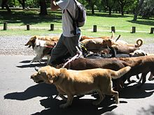 220px-Dog_walker_-_Buenos_Aires