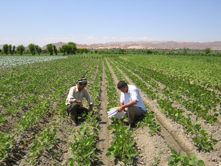 2005 - Tajikistan project moves forward - Data are recorded from demonstration plot