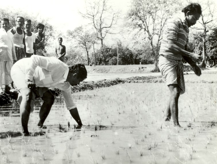 1989 - Urea deep placement (UDP) technology gains advocates in Bangladesh
