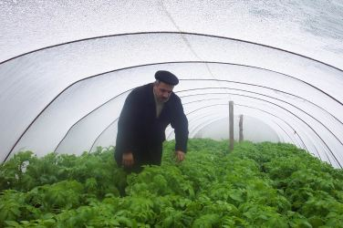 2004 - Entrepreneur benefits from project in Azerbaijan - Azeri dealer checks his potato crop being grown under plastic tunnels