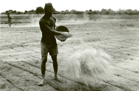 1981 - The IFAD project, one of the most important in IFDC's first decade, begins in Niger and Nigeria