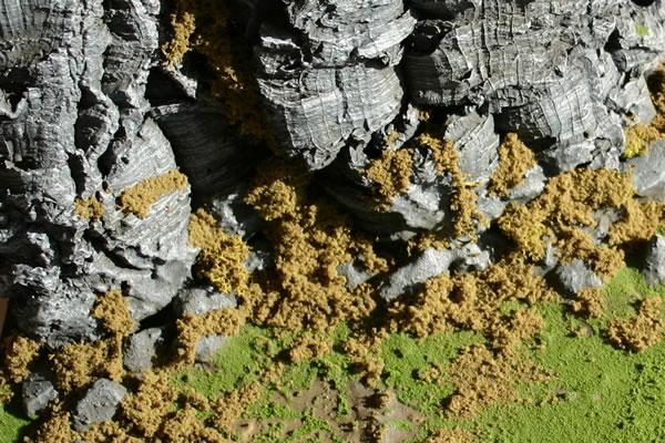 Photographic Terrain Grass