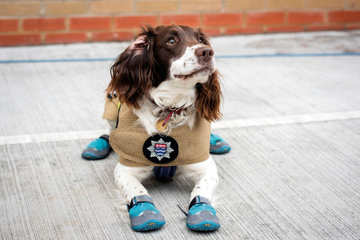 Simba one of our Fire Investigations Hydrocarbon detector dogs, trained to detect a range of ignitable liquids/accelerants.