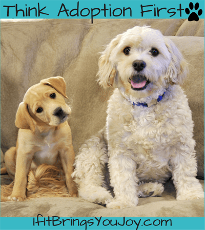 Dog Adoption & Rescue: a family tradition