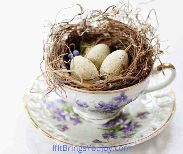 Birds nest displayed in tea cup