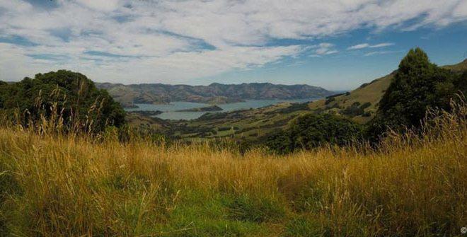 New Zealand Work Visa: First Few Weeks