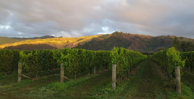 New Zealand Adventure: Working at a Vineyard