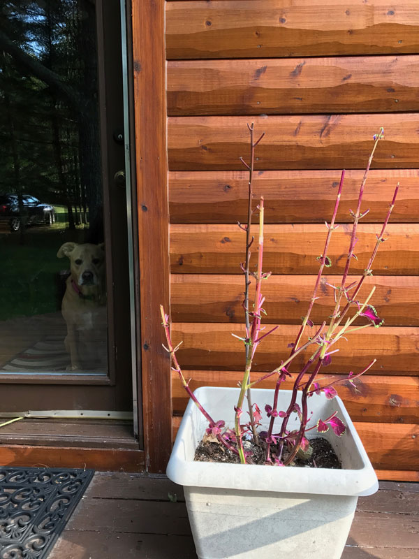 planter with leafless stem