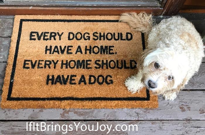 Matsy doormat for a dog fanatic