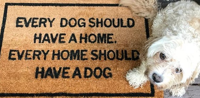 Doormat and dog