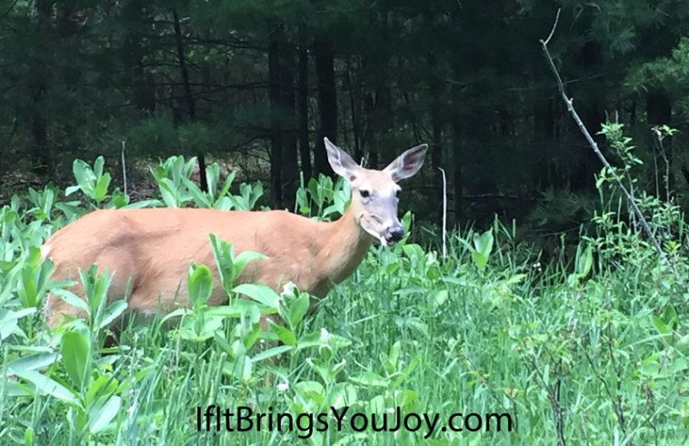 A curious deer posing as I take her photo. Nature is amazing, enjoy it! #nature