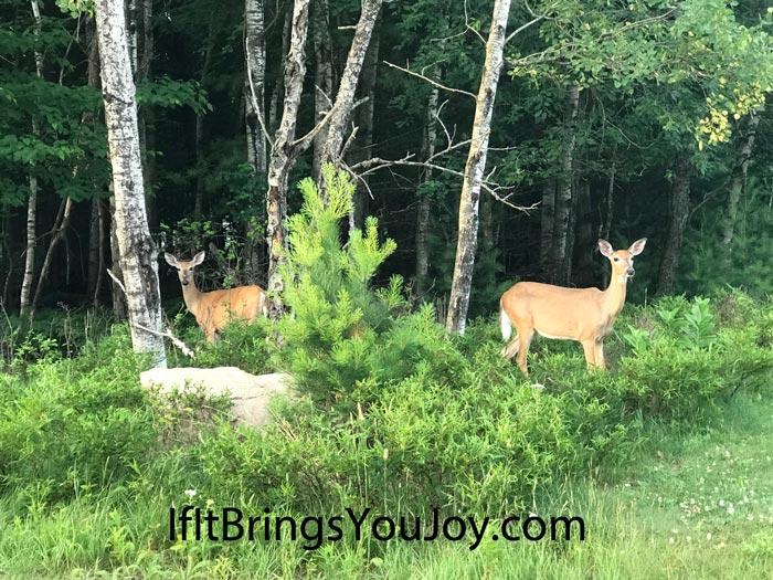 Deer near woods
