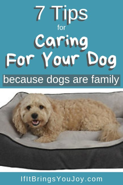 7 tips for caring for your dog (because dogs are family).