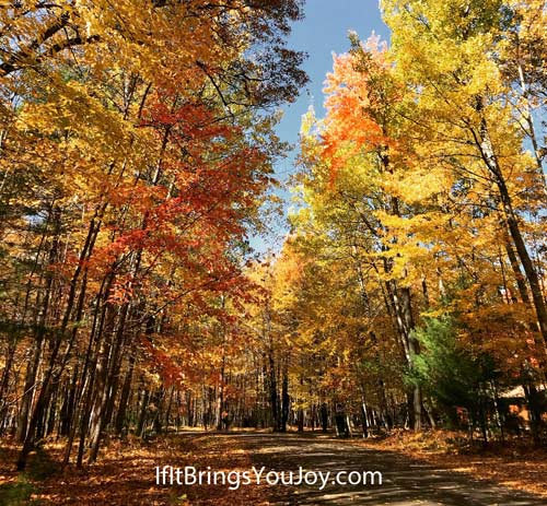 Gorgeous fall colors in trees