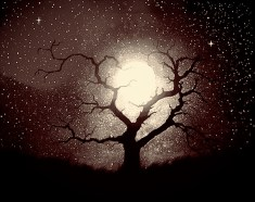 moon-tree-affected