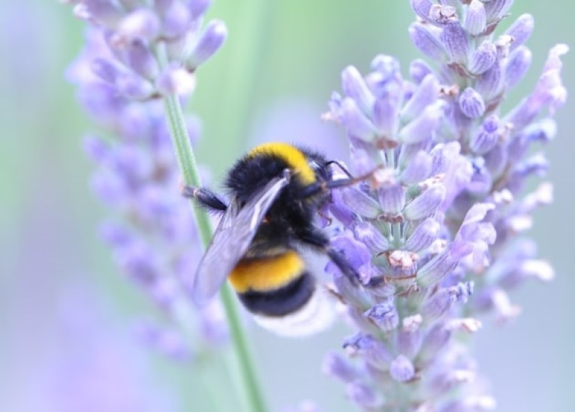 Hannah Blog - If Not Now - bumblebee