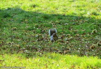 No leaf colour photo but a super cute squirrel instead!