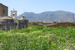 Wild flowers at Ancient Aptera