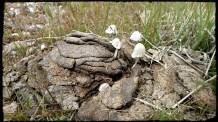 Mushrooms grow from interesting things