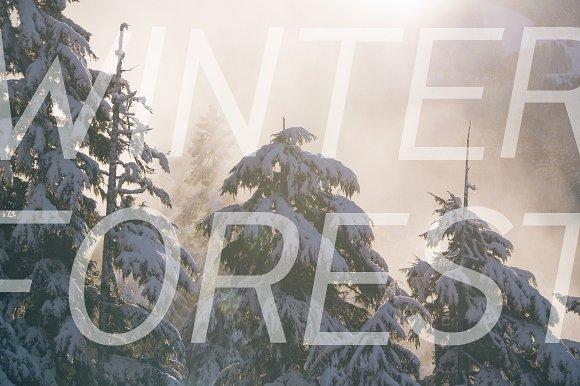 Pines Regular & Pines Italic