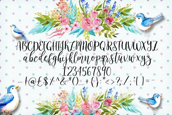 The Slowbird - Typeface