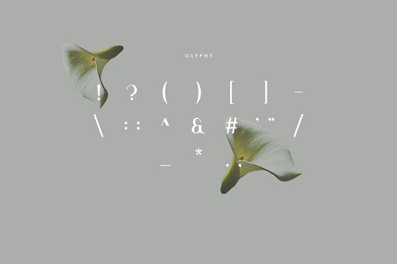 Premium Product - Viola Typeface