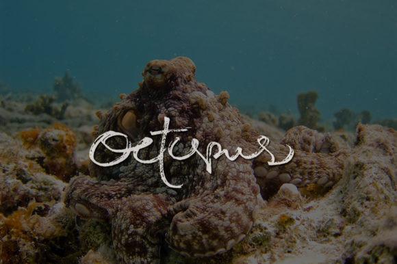 Octopus Font