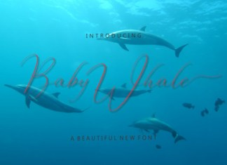Baby Whale Font