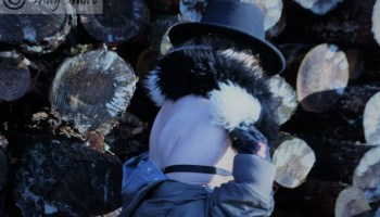 quirkiness hat bra overalls