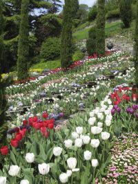 Landscape Design For Large Yards   Joy Studio Design ...