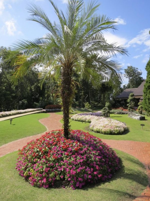 cozy palm tree landscaping