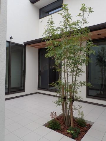 菖蒲原の家4