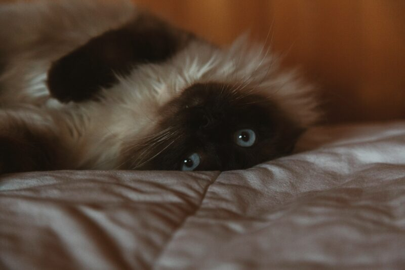 cat-on-the-bed