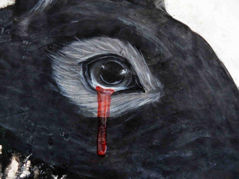 Eye' details