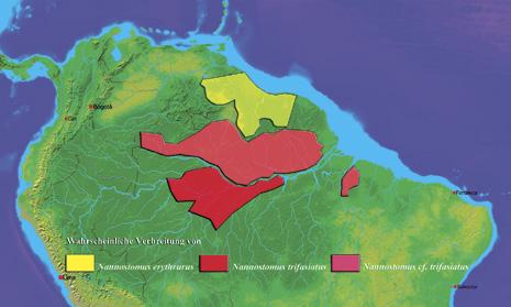 Verbreitung der drei Formen in Südamerika